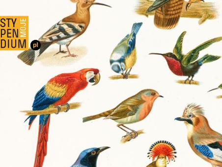 Ilustracja ptaki-plakat Stypendiów