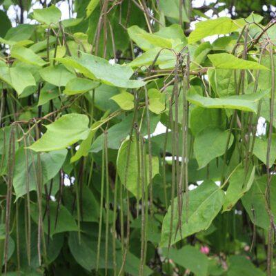 Wyjątkowa roślinność.