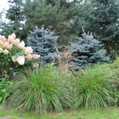 Bujna roślinność z horensjami w roli głównej.