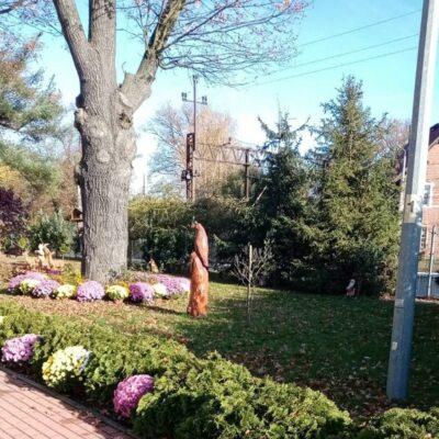 Chryzantemy rozmieszono wzdłuż wejścia i wokół drzewa.