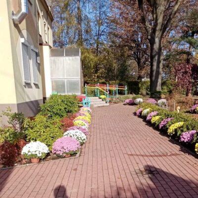 Chryzantemy wzdłuż chodnika przy przedszkolu w Raszówce.