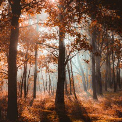 Jesień w obiektywie- Bukowna Magdalena Dziurman