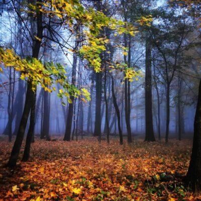 Jesień w obiektywie- Kamila Jarzębowska