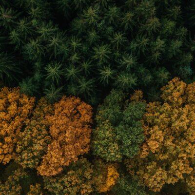 Jesień w obiektywie-Marcin Ziomek Lublin
