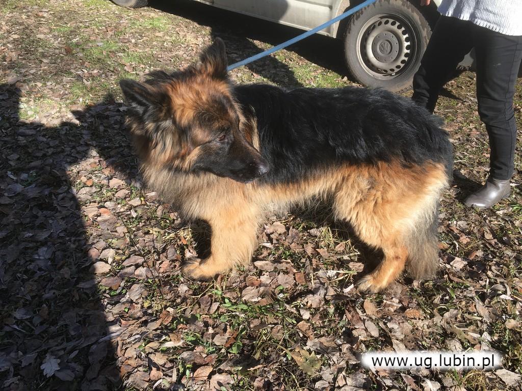 Trzy psy odnalezione w Zimnej Wodzie szukają właściciela lub nowego domu