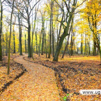 Usunięto samosiewy i drzewa grożące powaleniem