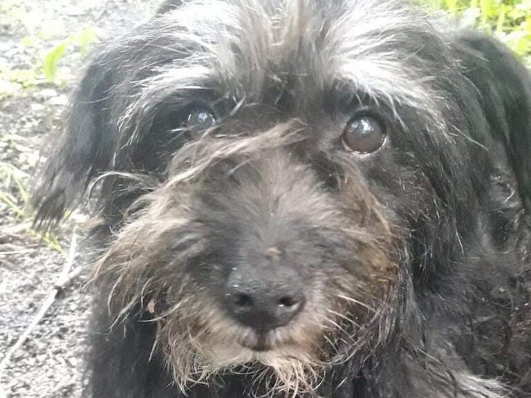 Pies odnaleziony w Liścu